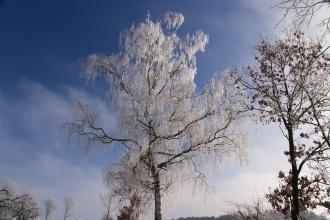 Ranni jinovatka na stromech