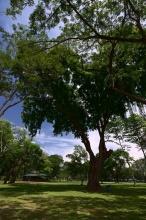 V parku Vihara Mahadevi