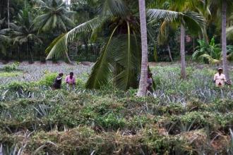 Farmáři v dálce. Všude bylo spousta komárů a vážek.