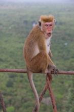 Opice na zábradlí :)