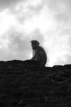 Starý, chocholatý opičák na římse.