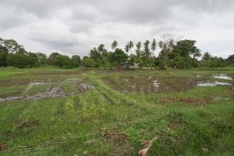 Rýžová pole.