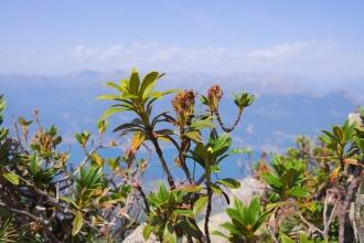 Netřesk, v pozadí jezero Como a vrcholky Italských Alp.