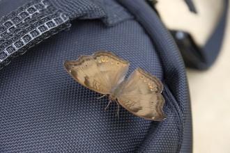 Motýl na brašně.