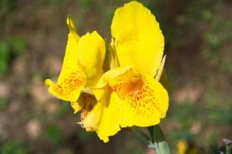 Orchidej u cesty