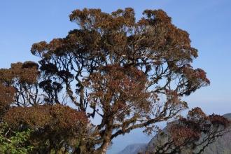 Tropické koruny stromů v nadmořské výšce kolem 2000mnm.