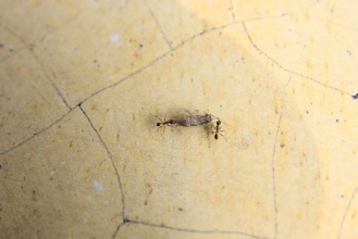 Mravenci v akci.