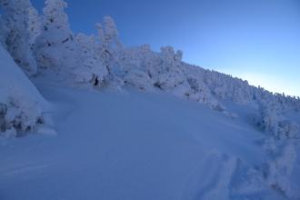 Obalené stromy při sestupu do Pece pod Sněžkou.