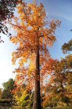 Zahrady kolem LV areálu v podzimním zabarvení.