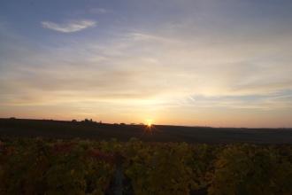 Východ slunce za sklípkem na vinici v Čejkovicích
