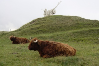 Poblíž továrny se pasou krávy s dlouhou srstí ...
