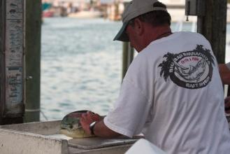 Floridský delfín ...aspoň každý mu tam tak říká.