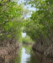 Proplouvání mangrovníky u Everglades