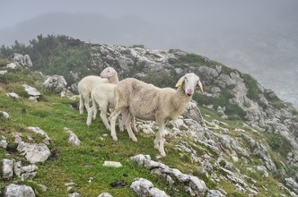 Ghoštové (když je nouze nejvyšší) jinak taky známé jako ovce (nedílná součást Bivaku IV :)