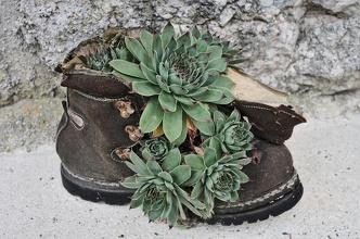 Dosloužená bota se může použít i jako květináč :)